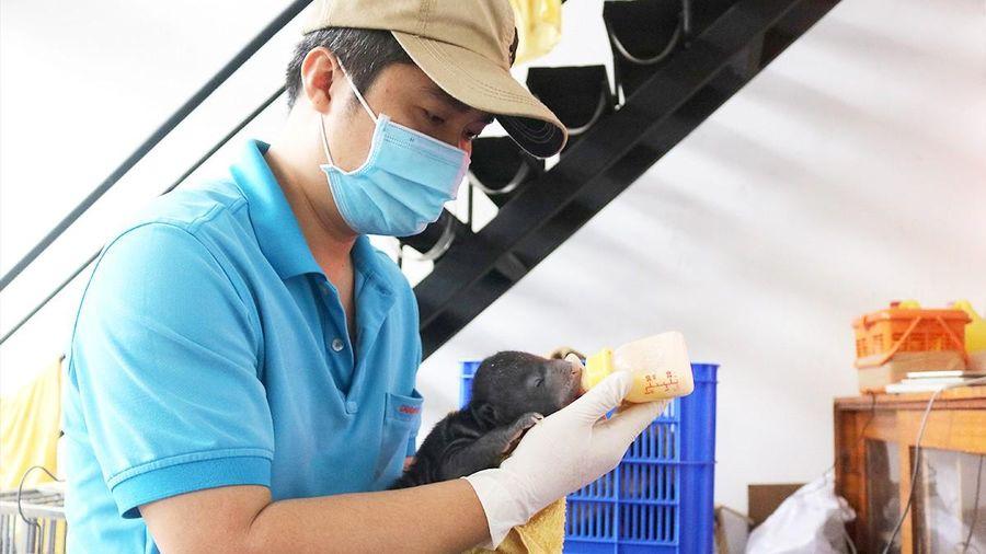 Chuyện ly kỳ ở Thảo Cầm Viên: Bé gấu trong căn phòng carton