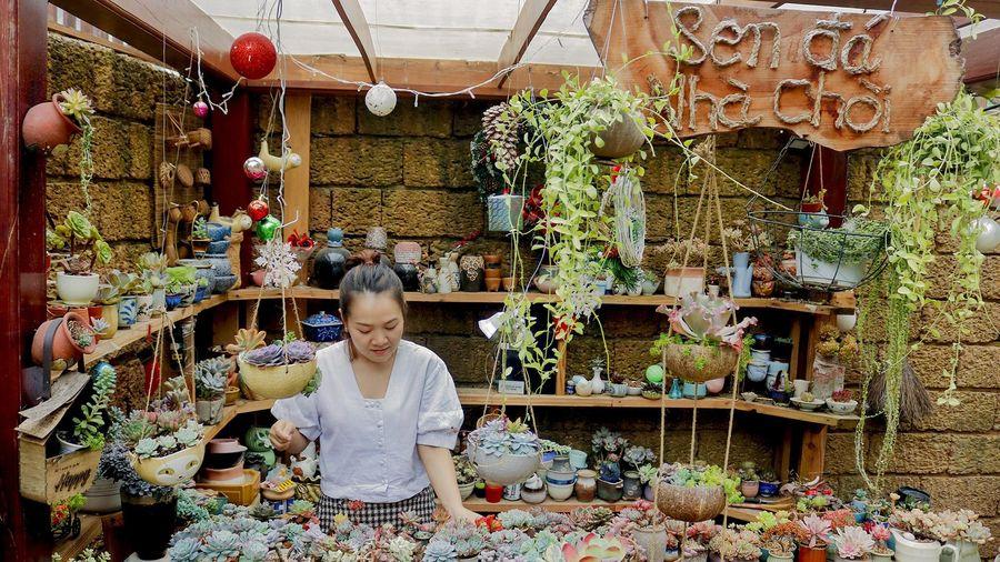 Ngắm vườn sen đá đẹp lung linh đón Tết ở Sài Gòn