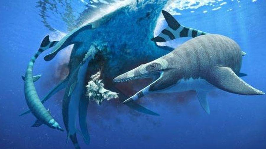 Sinh vật chưa từng thấy trên thế giới: khủng long 'trá hình' cá mập