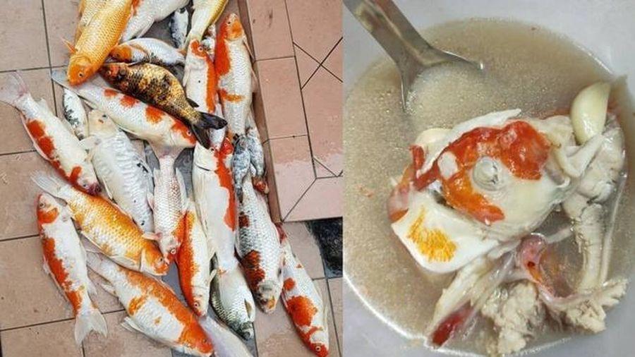 Khoe nồi súp nấu từ 20 con cá Koi, cô gái bị dân mạng lên án gay gắt
