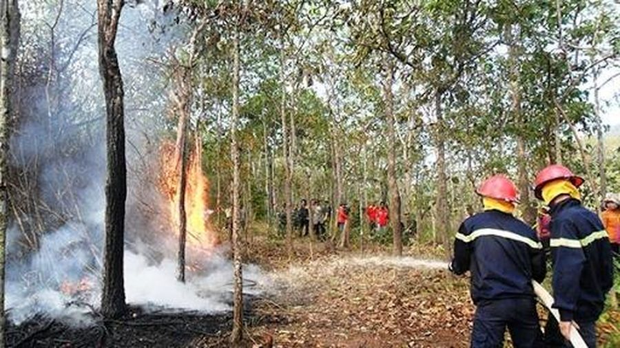 Tăng cường công tác phòng, chống cháy nổ, cháy rừng