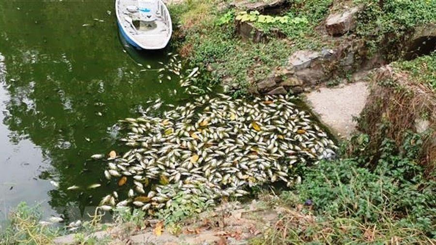 Tổng cục Môi trường thông tin về tình trạng cá chết trên kênh Bưng Cải