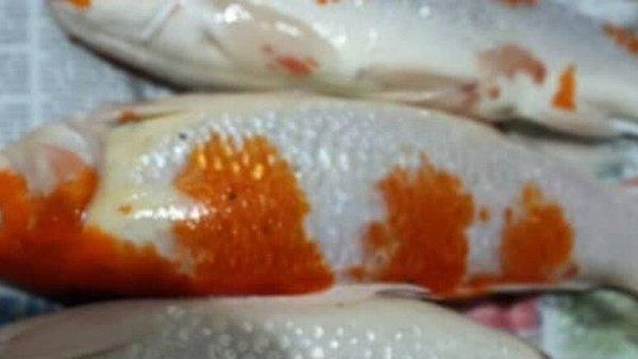 Cô gái 26 tuổi nhận 'gạch đá' vì mang cá Koi đi nấu súp