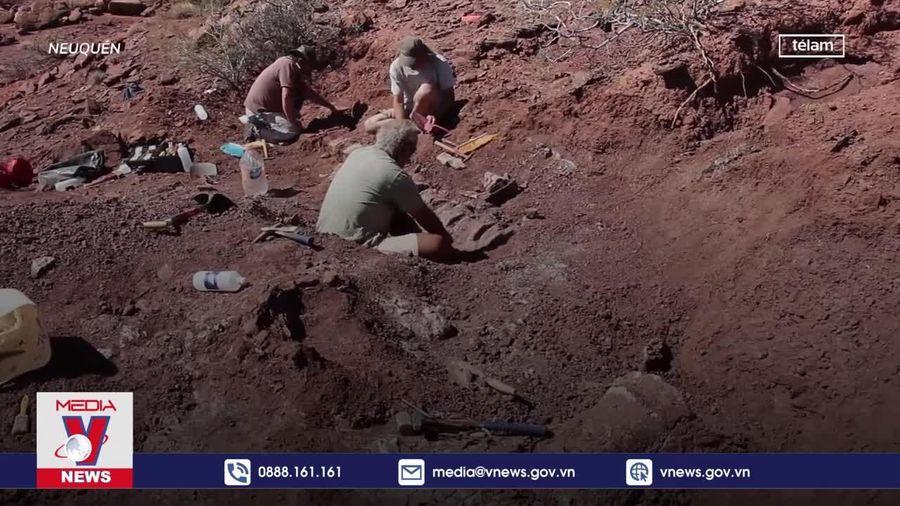 Phát hiện hóa thạch của loài khủng long lớn nhất thế giới