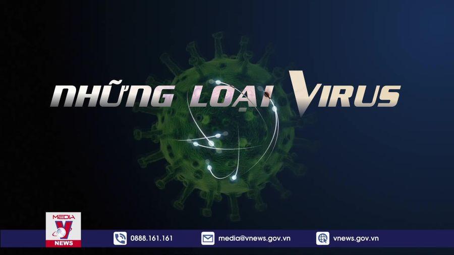 Những loại virus nguy hiểm nhất hành tinh