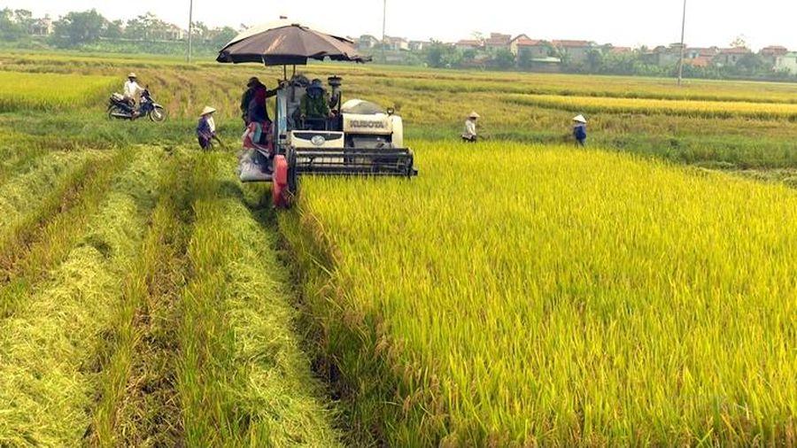 Giá lúa gạo hôm nay ngày 22/12: Giá gạo xuất khẩu tăng nhẹ