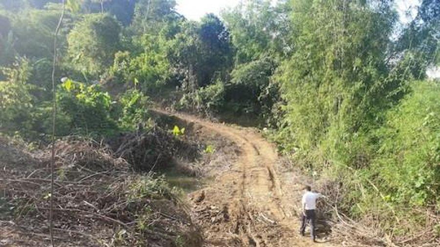 Nguyên trưởng ban quản lý rừng phòng hộ ở Nghệ An cùng thuộc cấp bị bắt