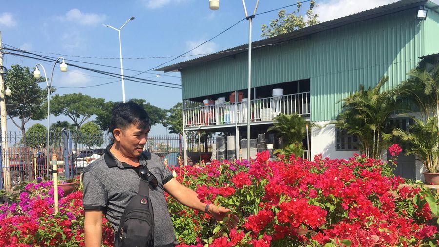 Hoa Tết bắt đầu xuống phố