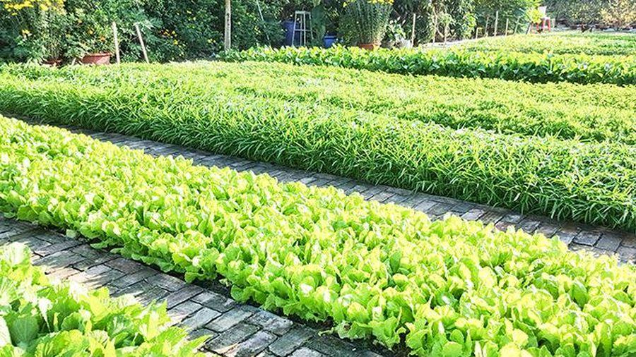 Vườn rau ngày xuân