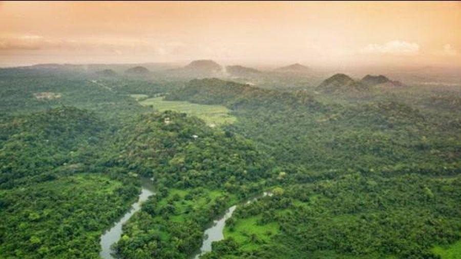 Tài chính tuần qua: LDG thâu tóm doanh nghiệp dự án phát triển rừng, Dabaco báo lãi 1.400 tỷ