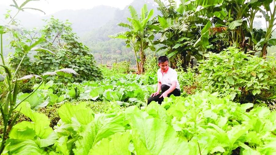 Đảng bộ huyện Quan Sơn lãnh đạo Nhân dân phát triển kinh tế