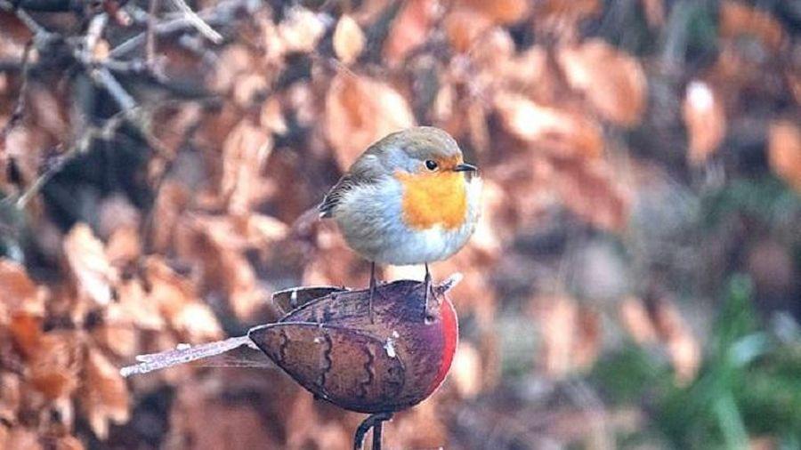 Chim ngang ngược đậu trên đầu người bạn 'vô tri vô giác'