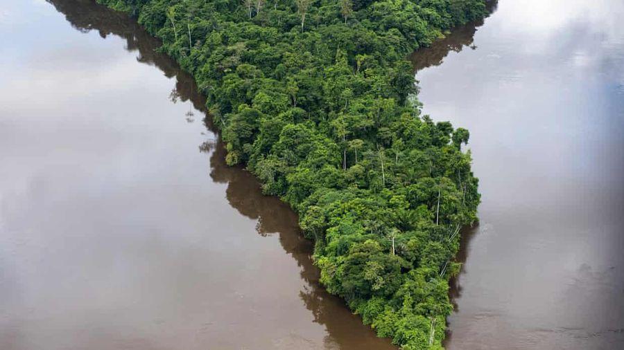 Xây dựng nền kinh tế xanh: Chìa khóa giải cứu rừng Amazon