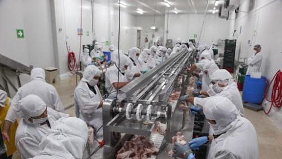 Khu chế biến thịt lợn trị giá 1,4 tỷ USD của tập đoàn AVG (Nga) tại Thanh Hóa