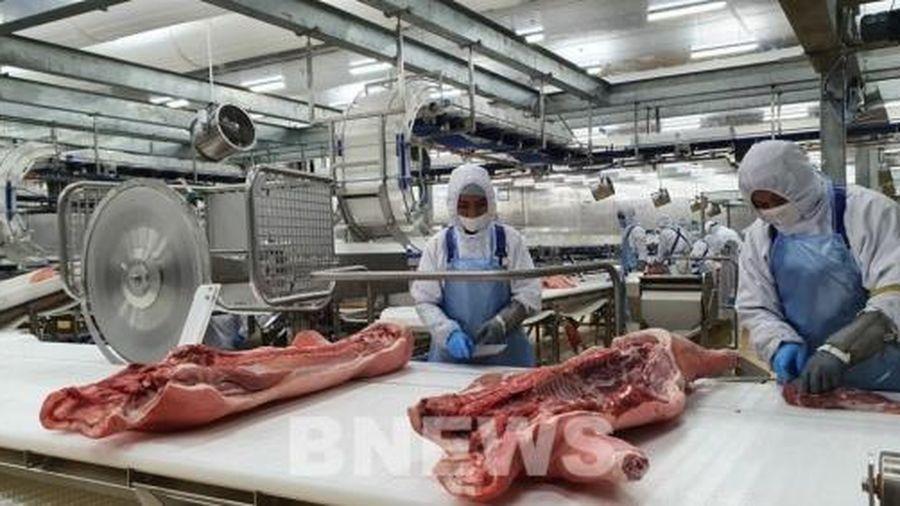 Tập đoàn AVG 'đổ' 1,4 tỷ USD vào nuôi, chế biến lợn tại Thanh Hóa