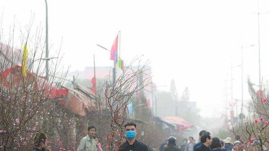 Chợ hoa Quảng An nhộn nhịp những ngày giáp Tết Tân Sửu