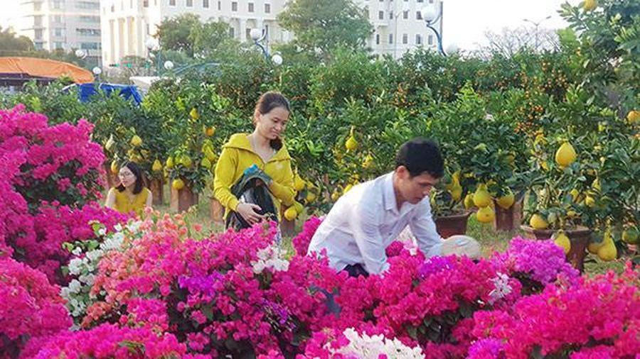 Đà Nẵng: Chợ hoa Tết Tân Sửu 2021 'lời ăn lỗ chịu', không xin hỗ trợ của ngân sách