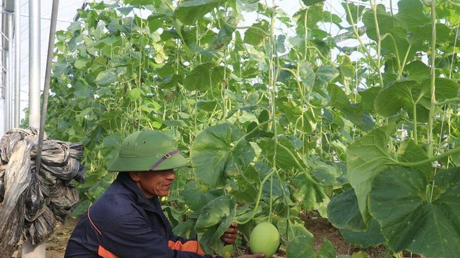 Huyện Thiệu Hóa phát triển nông nghiệp gắn với xây dựng NTM