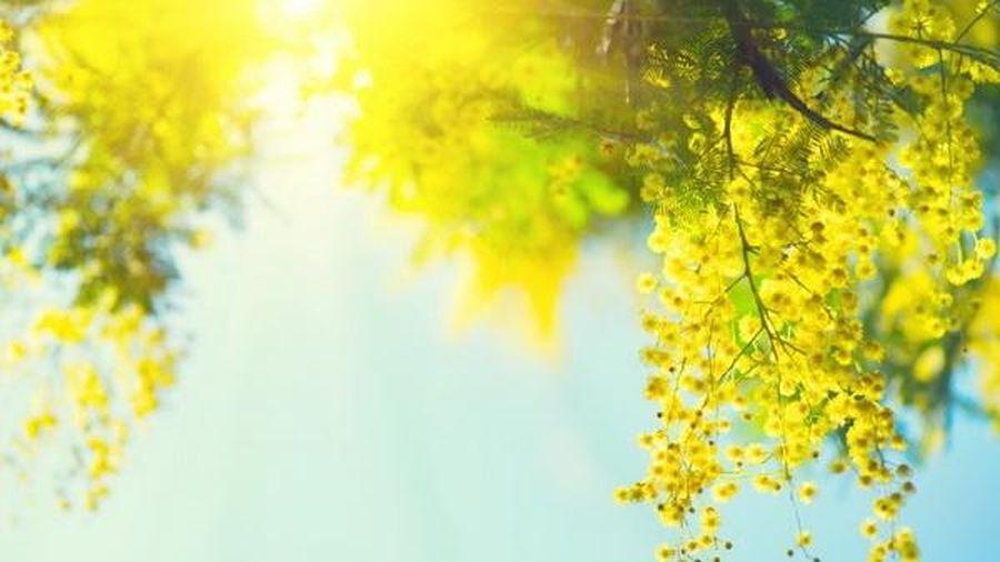 Sắc hoa xuân Ðà Lạt