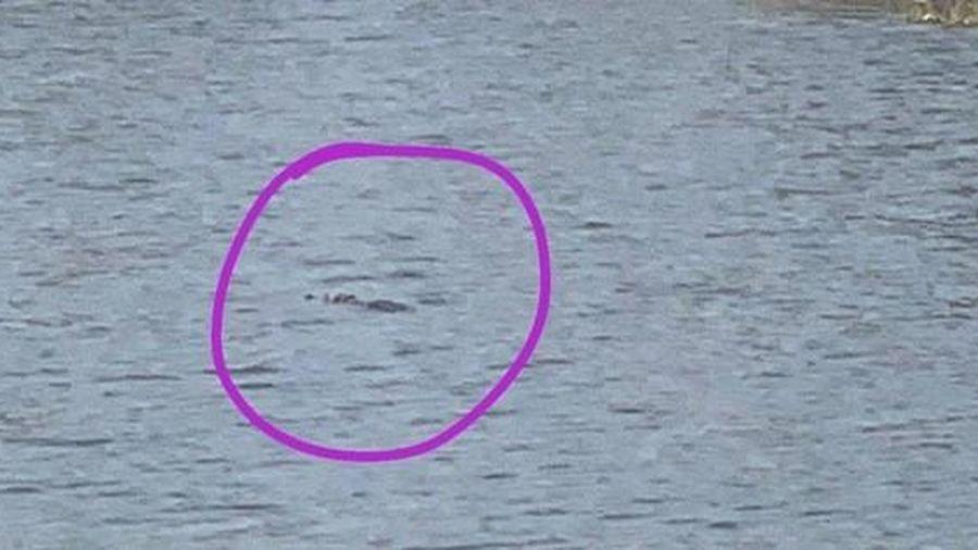 Vũng Tàu: Phát hiện 2 con cá sấu bơi trong hồ nước ngay khu dân cư?