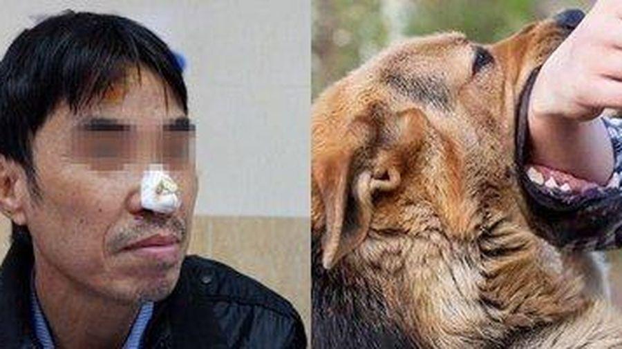Chó nhà 'mất não' cắn bay da mũi của chủ khi được cho ăn