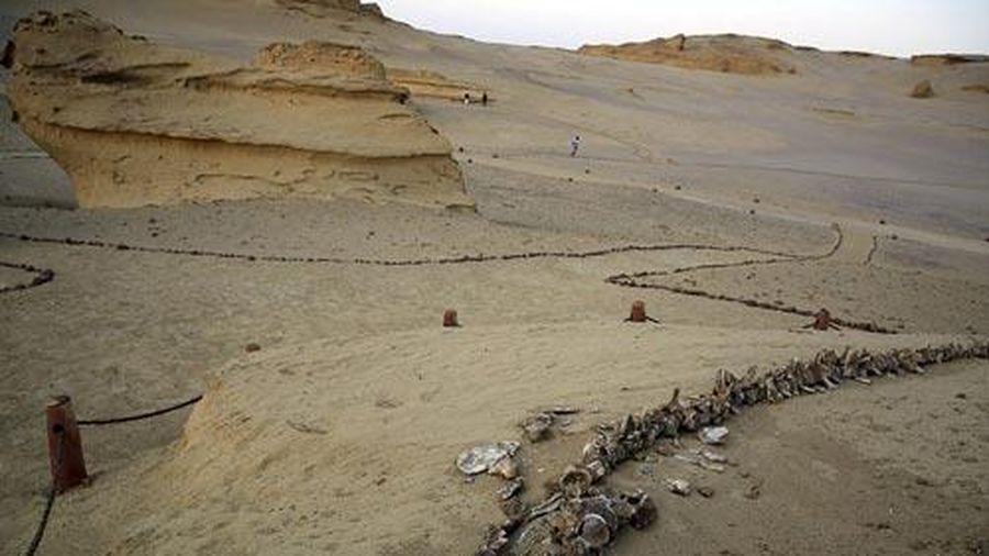 Thung lũng cá voi khổng lồ giữa sa mạc Sahara