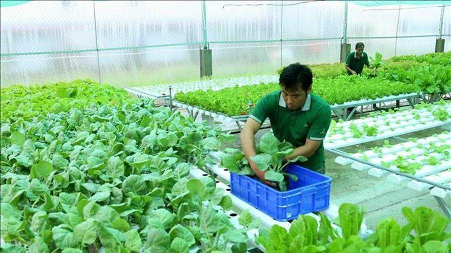 Phát triển nông nghiệp hữu cơ - Bài 1: Chưa tạo được giá trị tương xứng