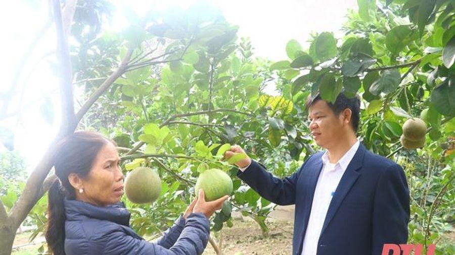 Xây dựng vườn mẫu: Nhìn từ cách làm của huyện Đông Sơn
