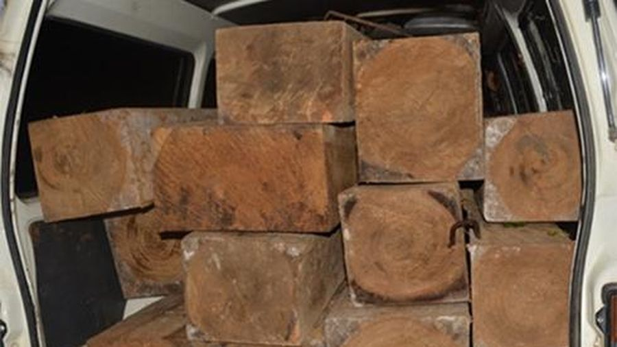 Phát hiện hơn 7,6m3 gỗ tập kết ven suối ở xã Liên Sang
