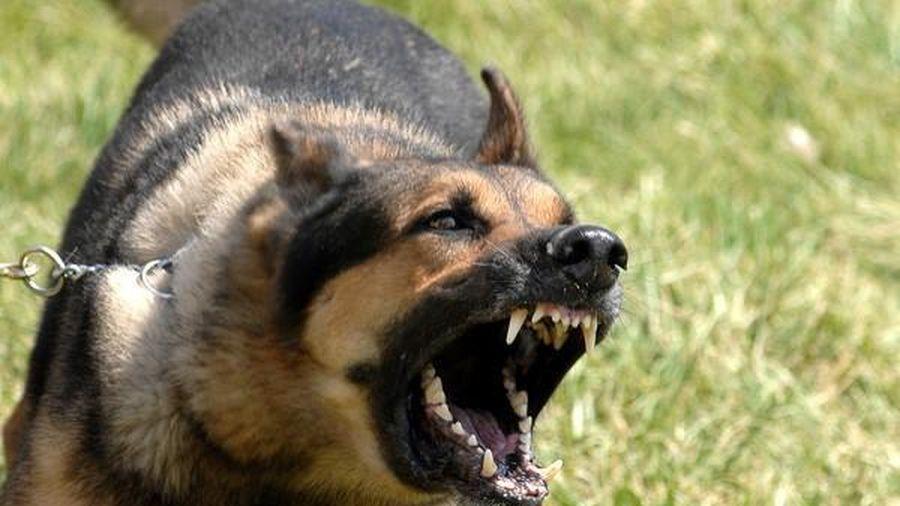Cho chó ăn, người đàn ông ở Thanh Hóa bị chó cắn rách mũi