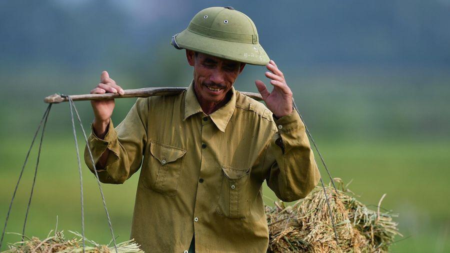 Gạo Việt xuất sang Anh bán giá gần 50.000 đồng/kg