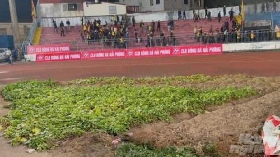 Người dân trồng rau tăng gia, chăn nuôi trong sân bóng đá V.League