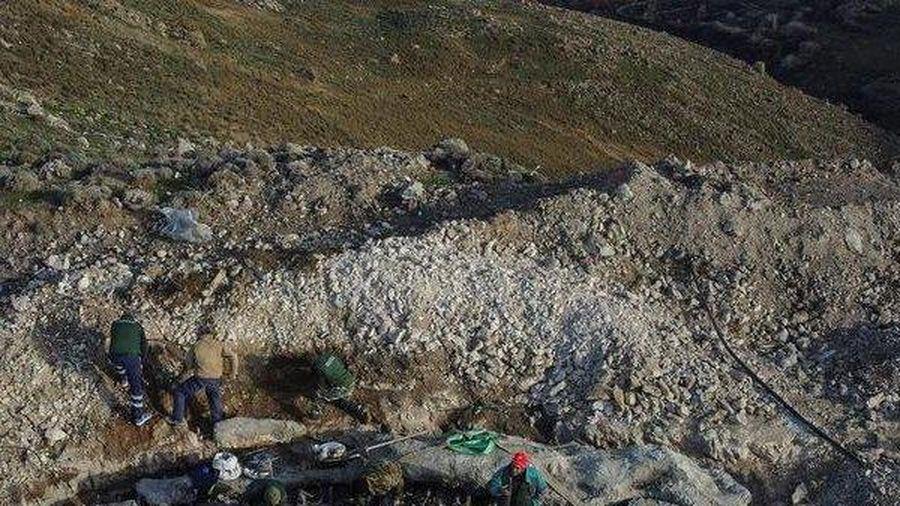 Cây cổ 20 triệu tuổi xuất hiện bất ngờ dưới lớp xẻng của công nhân đào đường