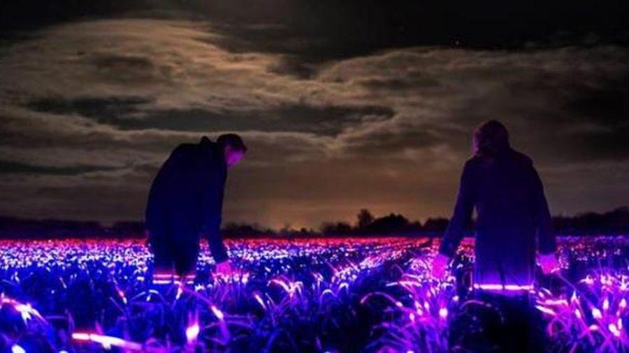 Choáng với hàng nghìn đèn LED biến nơi này thành xứ sở thần tiên