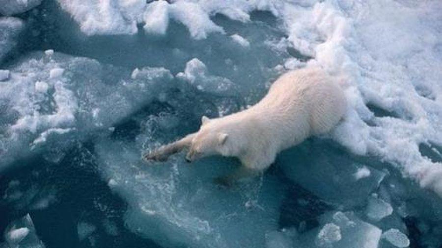 Các đại dương ấm dần lên trong 12.000 năm qua