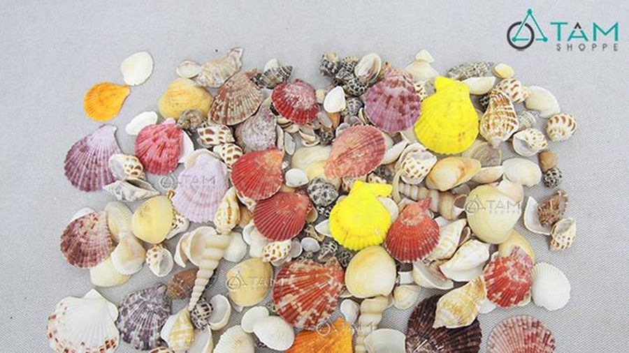 Nghiên cứu chế tạo hydroxy apatite từ vỏ sò và ứng dụng vào lĩnh vực xử lý môi trường