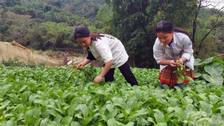 Học sinh miền núi trồng rau cải thiện bữa ăn