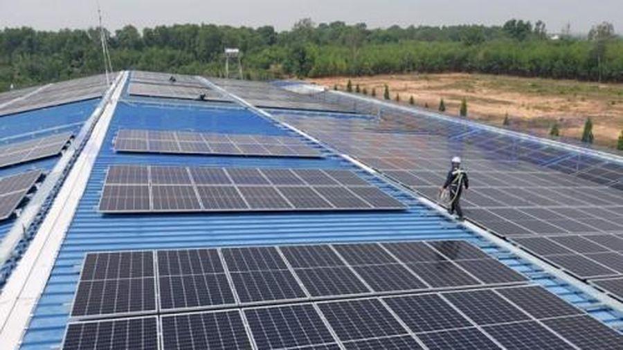 Quảng Trị: Chấp thuận chủ trương dự án trang trại kết hợp điện mặt trời áp mái hơn 842 tỷ đồng