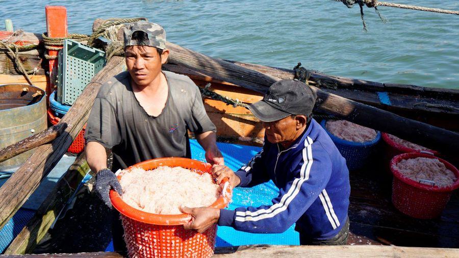 Ngư dân miền Trung phấn khởi vì 'lộc biển' đầu năm