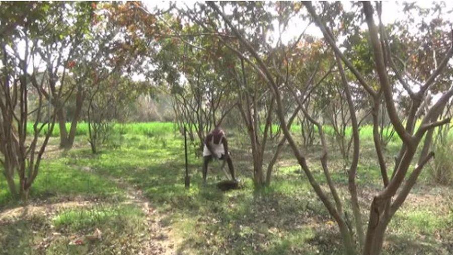 Người đàn ông Ấn Độ biến vùng đất cằn cỗi thành khu vườn hái ra tiền