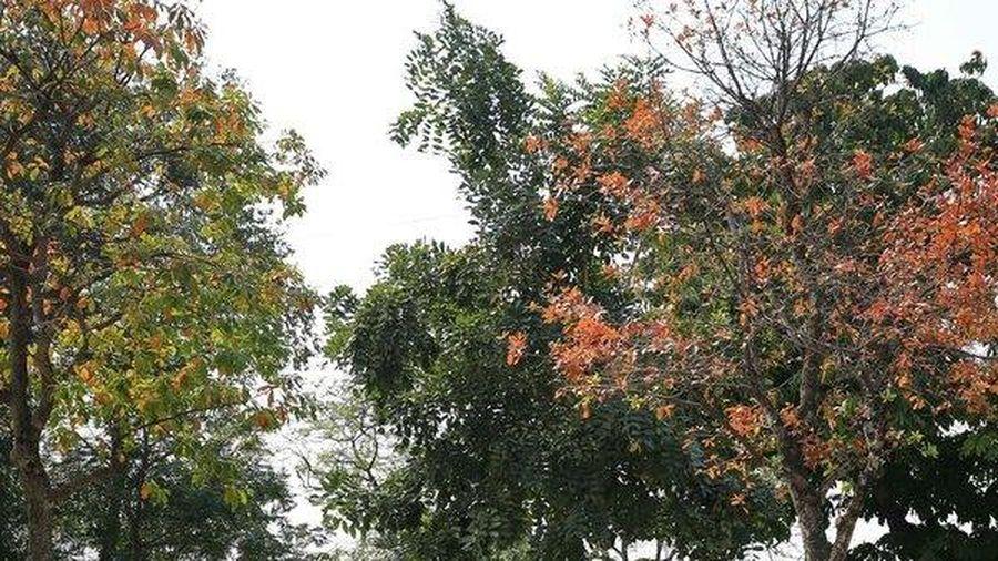 Ngắm Hà Nội nên thơ, trong mùa thay lá