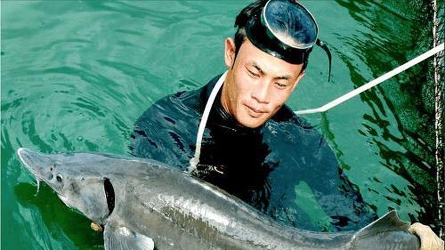 Tổng cục Hải quan yêu cầu siết chặt nhập khẩu cá tầm tại các cửa khẩu