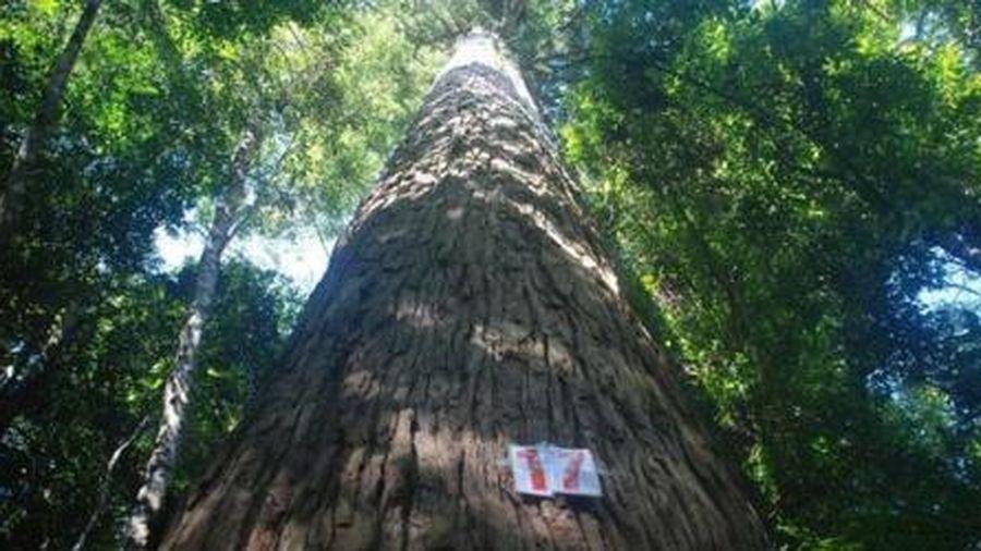 Khu bảo tồn thiên nhiên Xuân Liên: Nhiều dư địa phát triển du lịch
