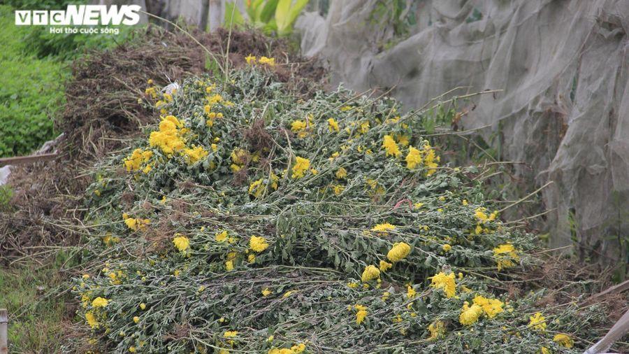 Cảnh chưa từng thấy ở làng hoa Tây Tựu nổi tiếng Hà Nội