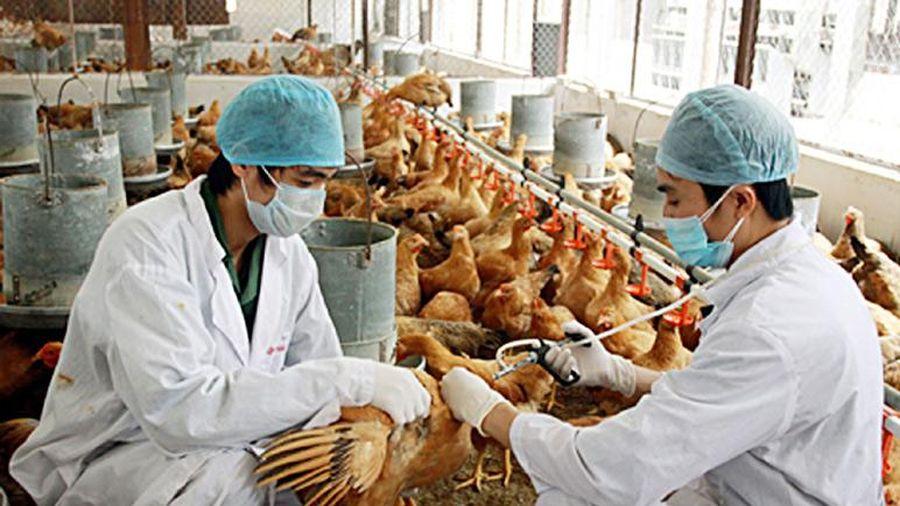 Nguy cơ dịch bệnh trên động vật phát sinh và lây lan rất cao, de dọa đến sức khỏe cộng đồng