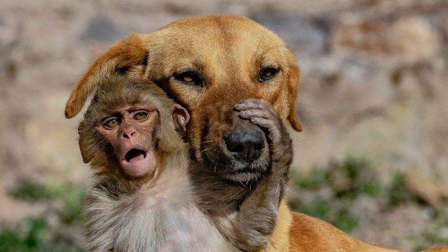 Đang đi đường tình cờ bắt gặp bộ đôi khỉ và chó quấn quýt, nhiếp ảnh gia tìm hiểu càng ngỡ ngàng hơn với mối quan hệ 'mẹ con' lạ đời của chúng