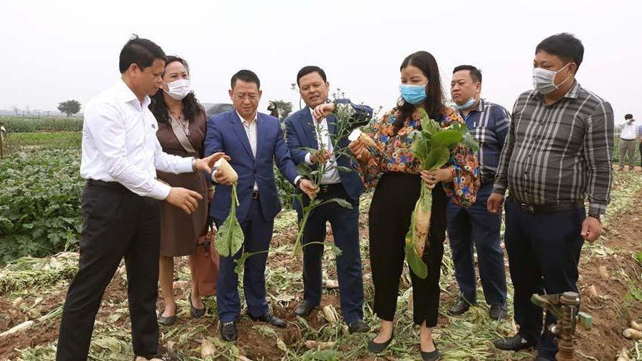 Sở Công Thương Hà Nội hỗ trợ người dân Mê Linh đẩy nhanh tiêu thụ nông sản