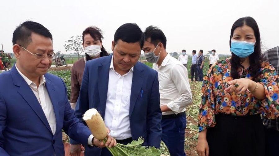 Nông sản Hà Nội trước tình trạng cung vượt cầu