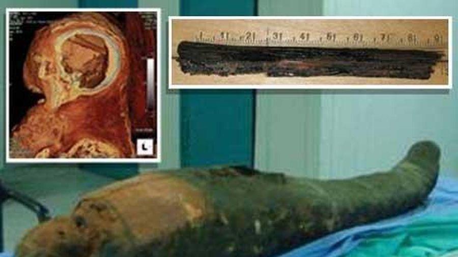 Phát hiện dụng cụ moi não xác ướp Ai Cập