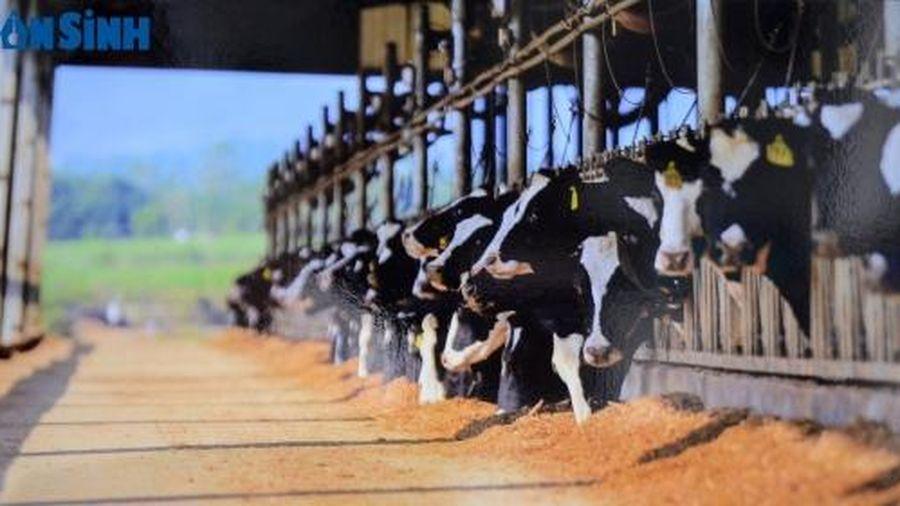 TH True Milk sẽ khởi công xây dựng trang trại bò sữa gần 2.700 tỷ đồng tại An Giang vào ngày 27/2